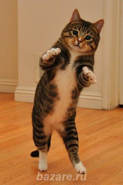 Кастрация кота на дому в воронеже