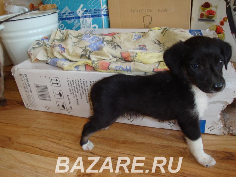 Щенок мальчик 1 месяц,  Волгоград
