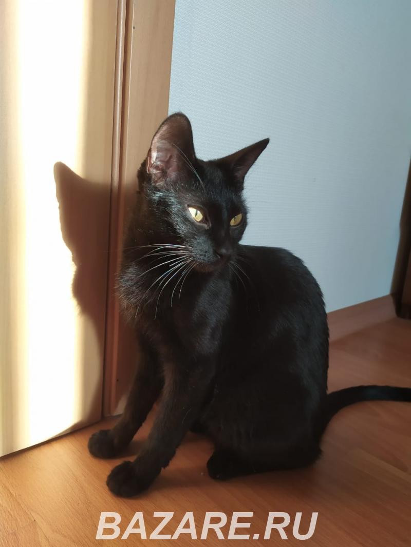 Кошка ищет новый дом, Краснодар. Прикубанский р-н